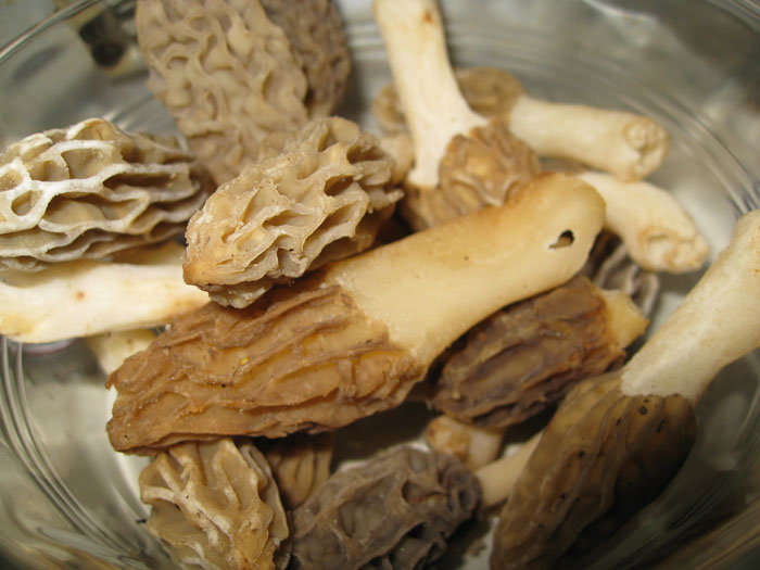 bowl of morels